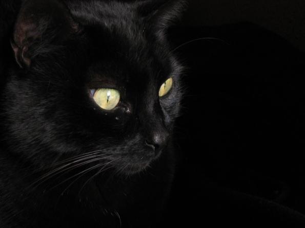 Gato_negro