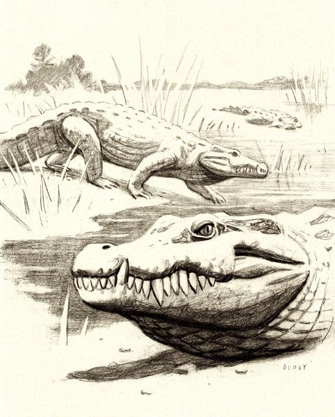 ENCARGOS Ilustración para la tesis doctoral del paleontólogo Iván Narváez Padilla